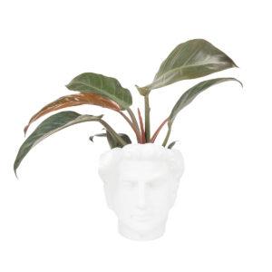 Zusss bloempot hoofd man