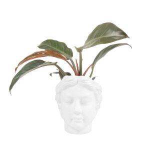 Zusss bloempot hoofd vrouw
